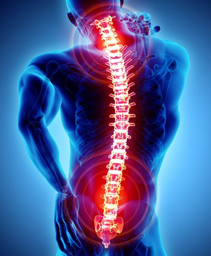 3d spine
